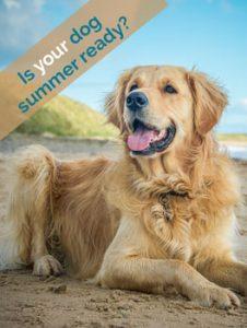 Dog summer ready
