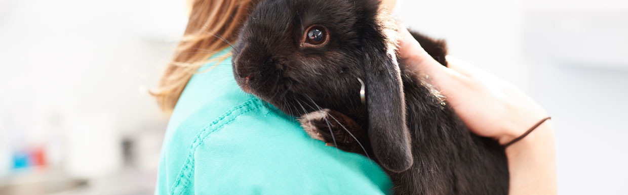 Dental care for rabbits