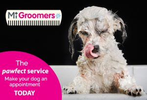 MiGroomers advert